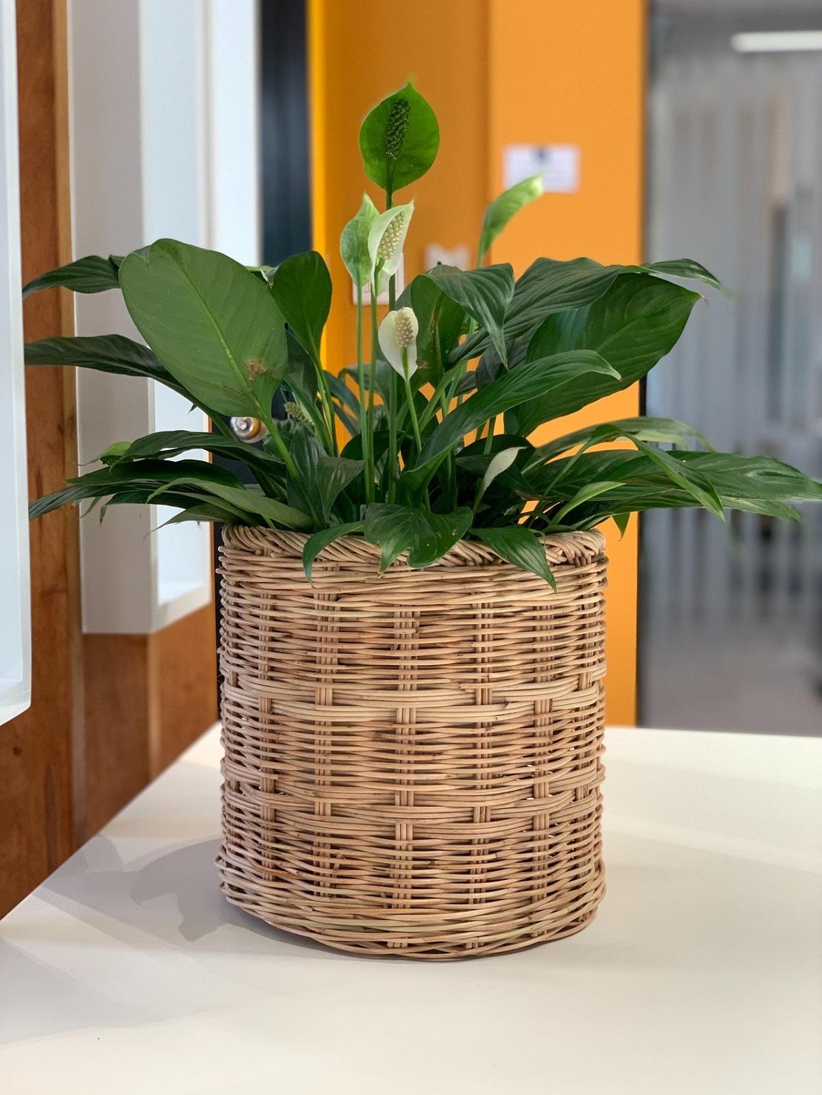 rattan plant pot